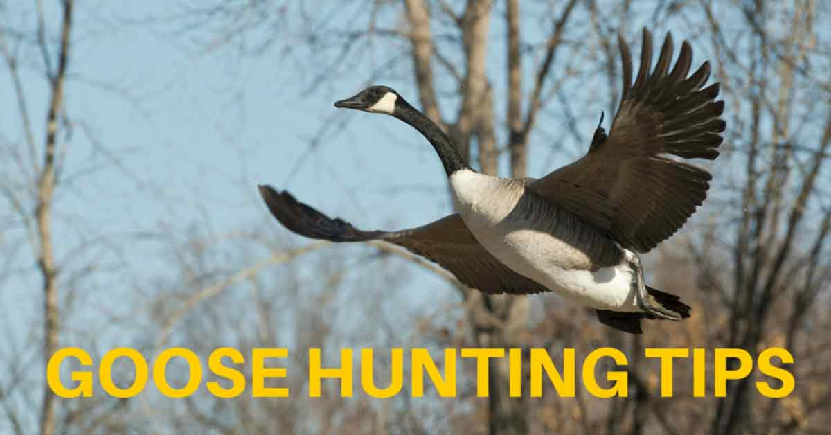 Goose Hunting Tips