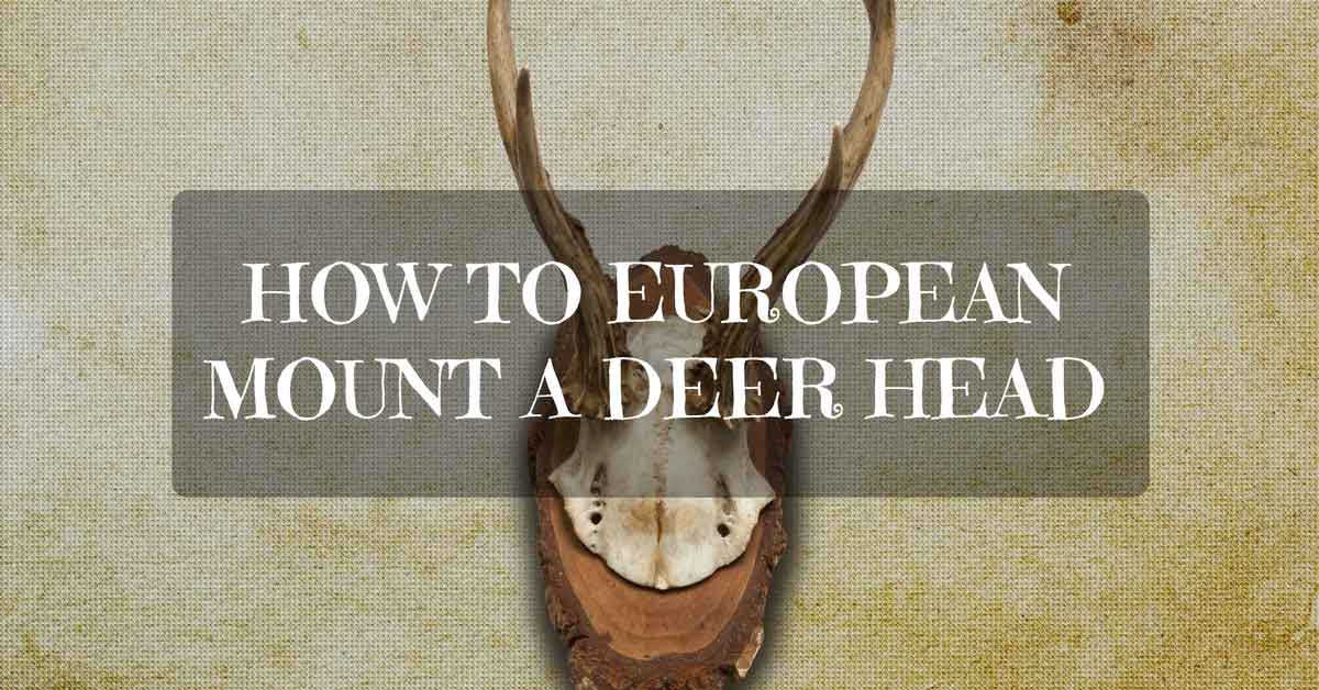 How to European Mount a Deer Head